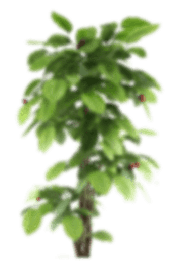plant-small-1
