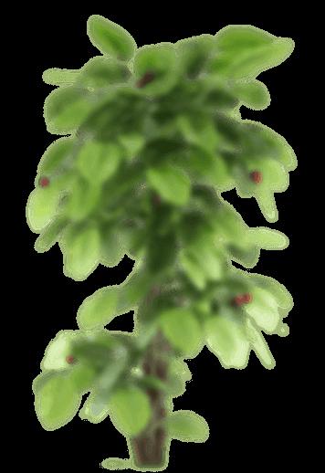 plant-small-1